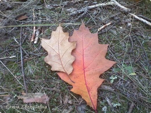 В осеннем лесу фото 7