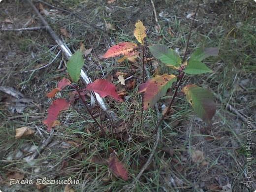 В осеннем лесу фото 9