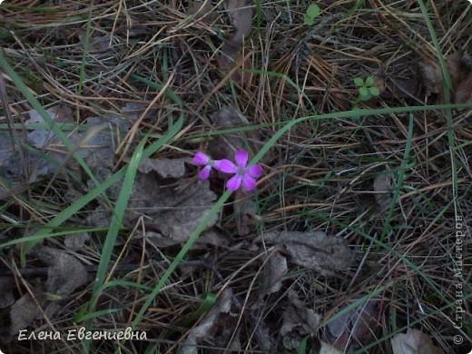 В осеннем лесу фото 10
