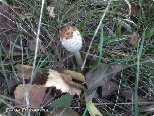 В осеннем лесу фото 12