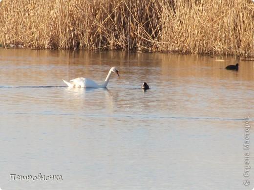Это чудо мы увидели на нашей речке Сосыке, летом мы сюда ездим на рыбалку, а зимой иногда приезжаем просто посмотреть. фото 3