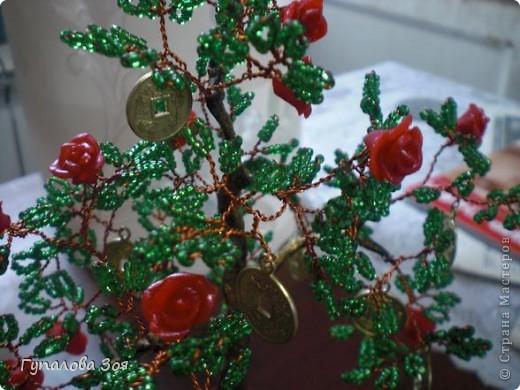 Денежно-розовое дерево. фото 3