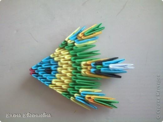 Алинкины рыбки фото 4