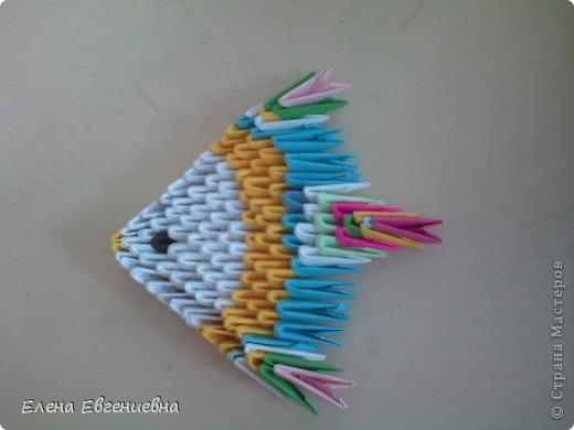 Алинкины рыбки фото 3