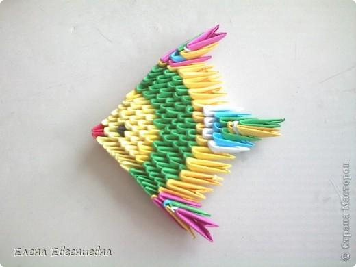 Алинкины рыбки фото 2