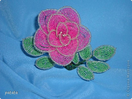 Роза розовая фото 2
