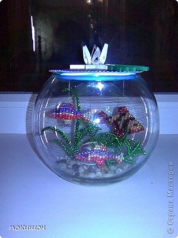 Мои аквариумы фото 2