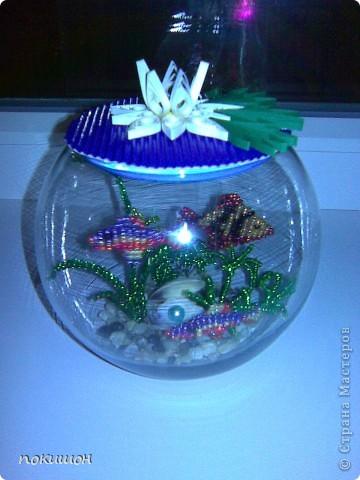 Мои аквариумы фото 1