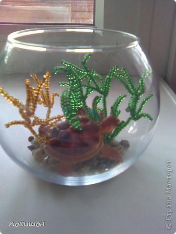 Мои аквариумы фото 4