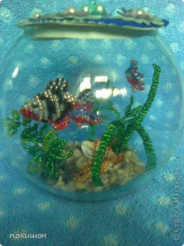 Мои аквариумы фото 3