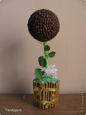 У кого то в блоге читала что кофейное деревцо к денюжкам в доме :), ну так или иначе хотелось просто попробовать сделать и опять на свое усмотрение. фото 1