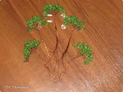 По  Фен шуй для привлечения богатства используется так называемое денежное дерево, которое не просто помогает, а в буквальном смысле притягивает к вам энергию денег. фото 15