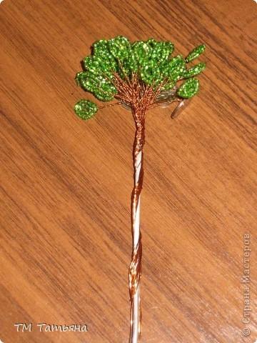 По  Фен шуй для привлечения богатства используется так называемое денежное дерево, которое не просто помогает, а в буквальном смысле притягивает к вам энергию денег. фото 16