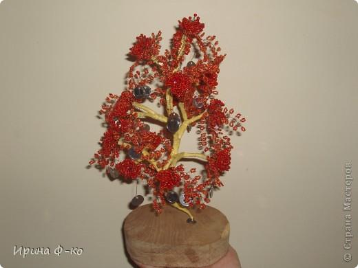 денежное дерево фото 9