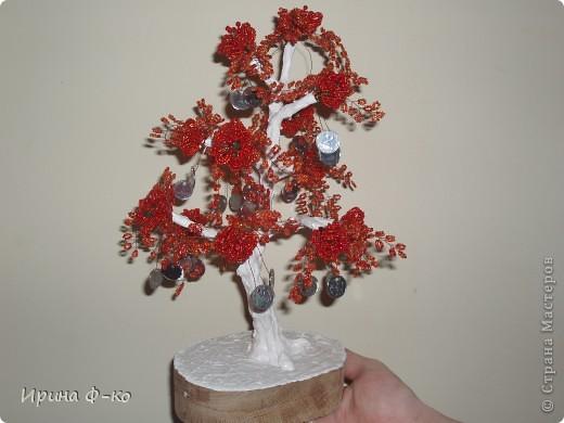 денежное дерево фото 10