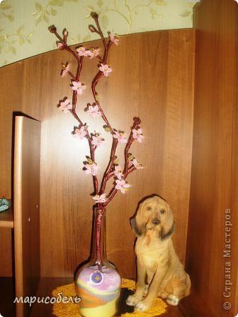 ветка персика фото 2