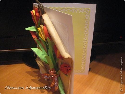 тюльпаны фото 3