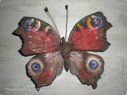 """Вот  такую бабочку я слепила из соленого теста и расписала гуашью. Только пришлось бабочку делать """"гигантских"""" размеров, чтобы более точно  повторить рисунок её крыльев. фото 5"""