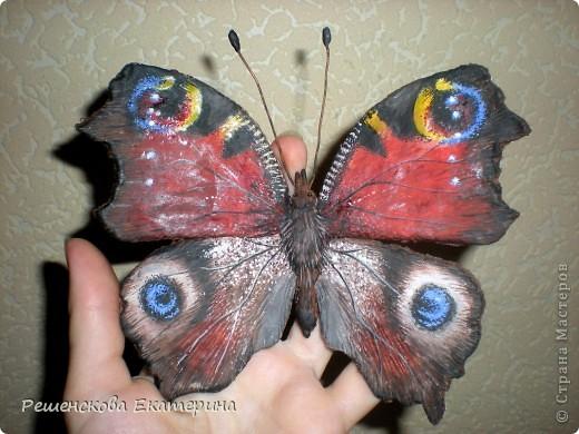 """Вот  такую бабочку я слепила из соленого теста и расписала гуашью. Только пришлось бабочку делать """"гигантских"""" размеров, чтобы более точно  повторить рисунок её крыльев. фото 6"""