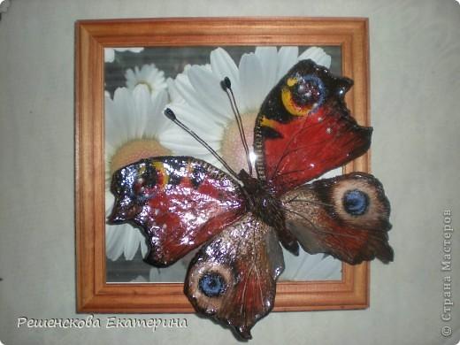 """Вот  такую бабочку я слепила из соленого теста и расписала гуашью. Только пришлось бабочку делать """"гигантских"""" размеров, чтобы более точно  повторить рисунок её крыльев. фото 7"""