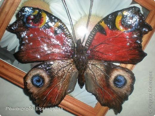 """Вот  такую бабочку я слепила из соленого теста и расписала гуашью. Только пришлось бабочку делать """"гигантских"""" размеров, чтобы более точно  повторить рисунок её крыльев. фото 8"""