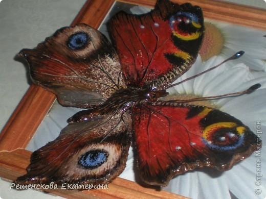"""Вот  такую бабочку я слепила из соленого теста и расписала гуашью. Только пришлось бабочку делать """"гигантских"""" размеров, чтобы более точно  повторить рисунок её крыльев. фото 9"""
