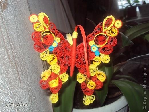 Апельсиновая бабочка фото 1