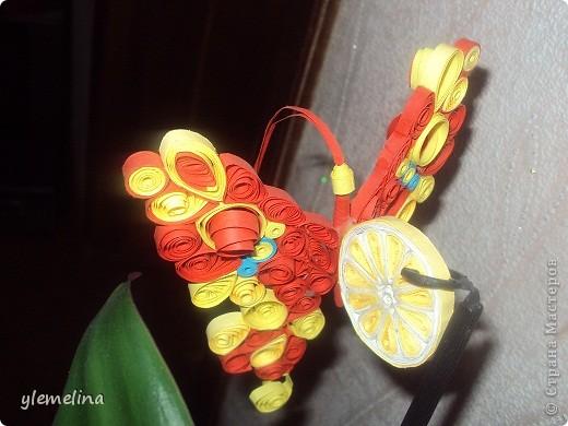 Апельсиновая бабочка фото 2