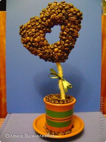 Пополнение моей кофейной плантации. фото 4