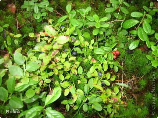 Доброе время суток! Опять я пристаю к вам со своими картинками. Но уж очень хочется порадовать вас летними ягодками и фруктами да загадочками про них. Не спешите крутить колесико: сначала загадка – потом картинка. ---------------- Эта фотка просто для красоты. А загадка первая про то место, где сделаны ( в основном) эти фотографии. ------------- Неразлучный круг подруг Тянет к солнцу сотни рук. А в руках душистый груз, Разных бус. На разный вкус.    фото 12