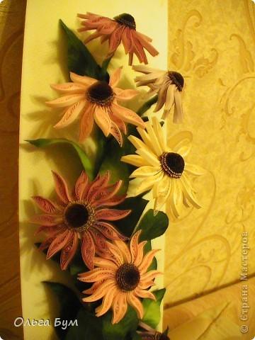 Эхинацеи! Люблю этот цветок в квиллинге - радостный и простой. фото 3