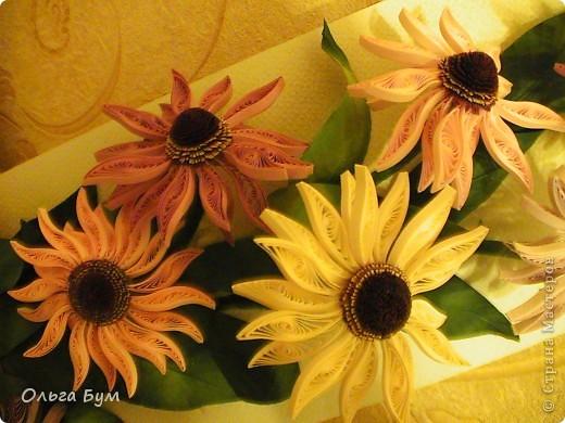 Эхинацеи! Люблю этот цветок в квиллинге - радостный и простой. фото 1