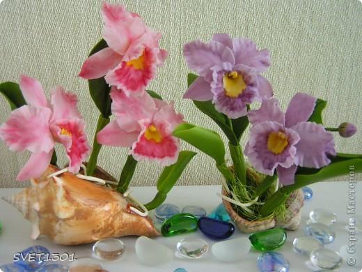 Орхидей на сайте уже много, но я то же не удержалась и слепила из холодного фарфора мини орхидеи. фото 1