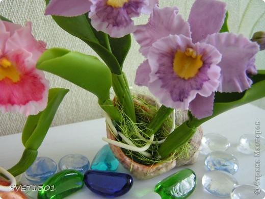 Орхидей на сайте уже много, но я то же не удержалась и слепила из холодного фарфора мини орхидеи. фото 3