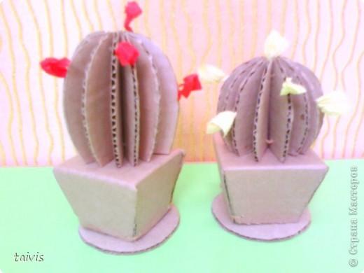 Кактусы расцвели. фото 1