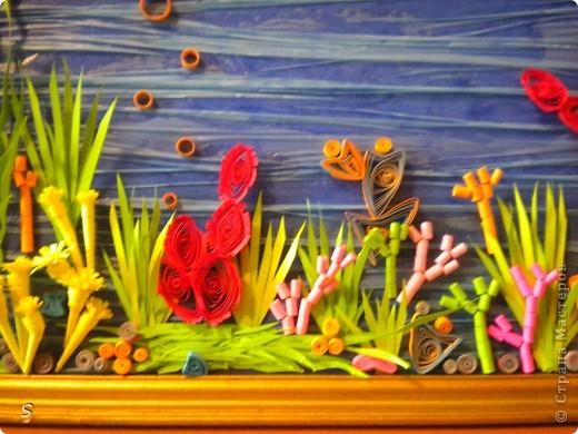 Мой коралловый риф фото 8
