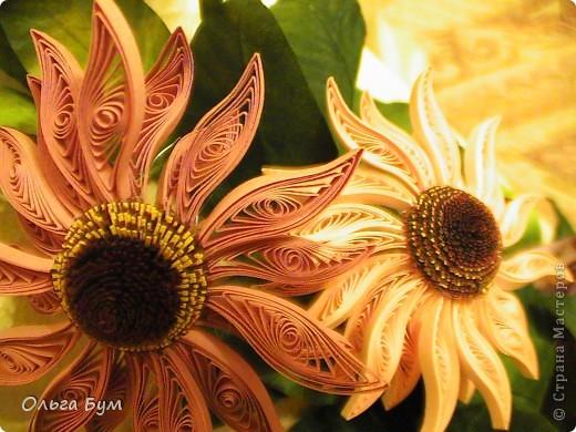 Эхинацеи! Люблю этот цветок в квиллинге - радостный и простой. фото 5