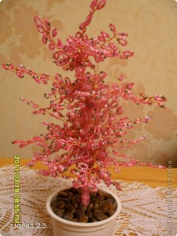 гранатовое дерево. фото 3