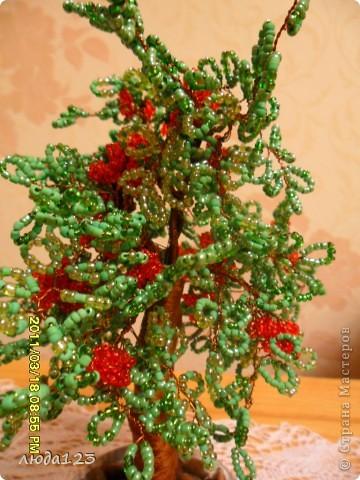 гранатовое дерево. фото 1