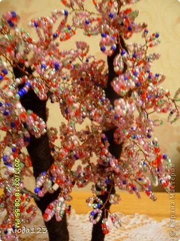 гранатовое дерево. фото 4