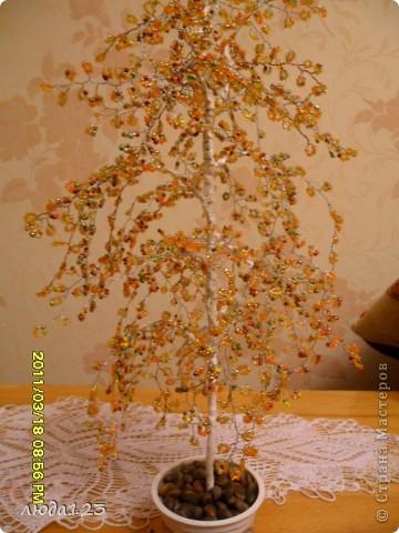 гранатовое дерево. фото 5