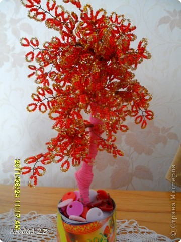 гранатовое дерево. фото 6