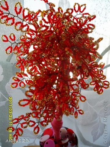 гранатовое дерево. фото 7