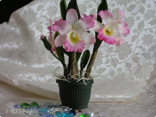 Как Вы уже поняли у меня начала развиваться орхидейная зависимость! фото 1
