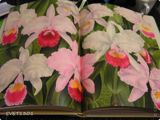 Как Вы уже поняли у меня начала развиваться орхидейная зависимость! фото 3
