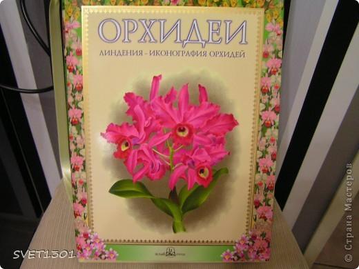 Как Вы уже поняли у меня начала развиваться орхидейная зависимость! фото 2