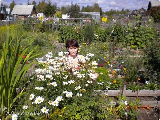 Моя любимая дача 2009 год ( продолжение следует) фото 8