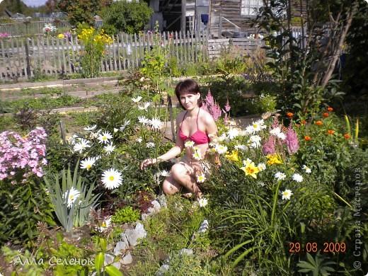 Моя любимая дача 2009 год ( продолжение следует) фото 11