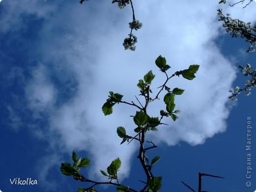"""Люблю смотреть на облака! Всегда засматриваюсь на них, не думая о том, что так можно и упасть :-))! И если есть возможность - фотографирую. А возможность есть в основном на даче. Приглашаю всех, небезразличных к """"небесным странникам"""", на мою страничку! фото 13"""