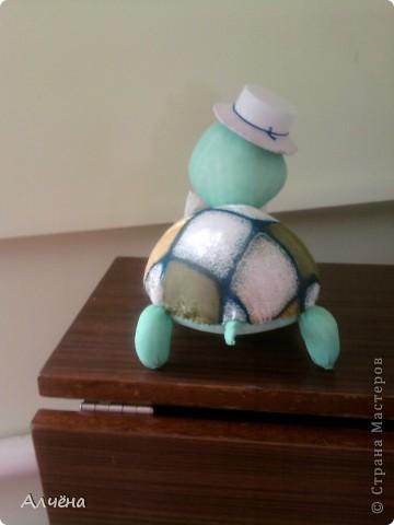 Черепах Стёпка фото 5